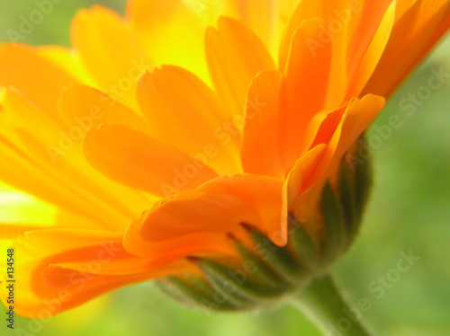 Keuken foto achterwand Gerbera orange gerbera