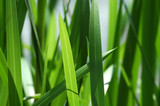 green grass background poster