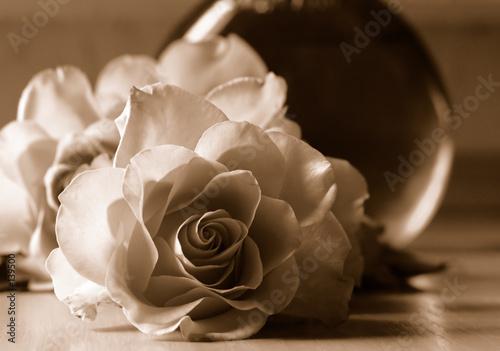 roze-w-odcieniu-sepii