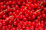currant berries poster