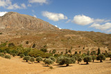olive trees and mountains. crete, greece poster