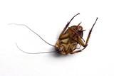 dead cockroach poster