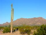 saguaro two poster