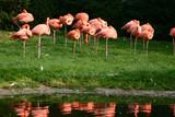 zoo flamingo poster