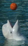 white whale playing basketball poster