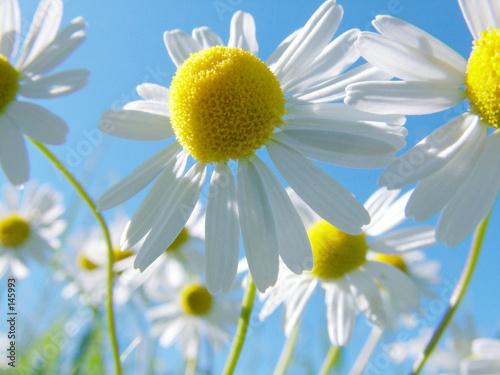 canvas print picture sommerwiese