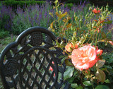 english garden rose and chair poster