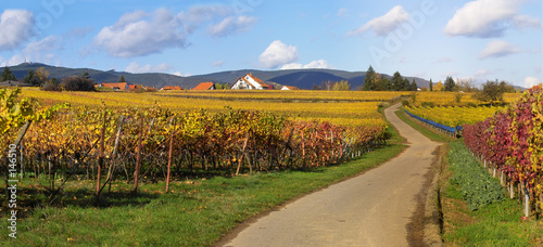 road in wineyards