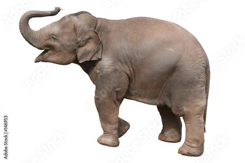 Poster baby elephant