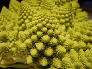 fractal vegetal