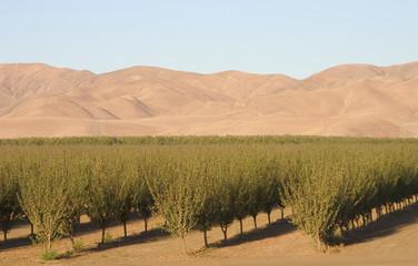 california farmland #6