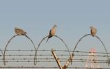 jail birds poster