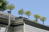 rooftop garden poster