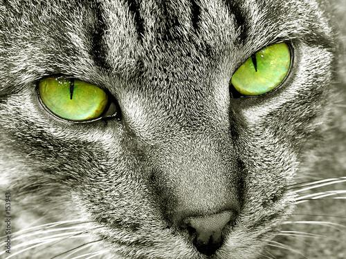 cat eyes foto. cat#39;s eyes
