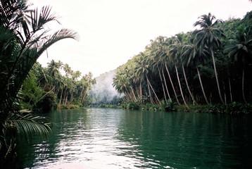 phillipine river view - loboc river
