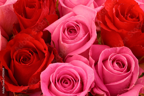 pink and red roses, bouquet