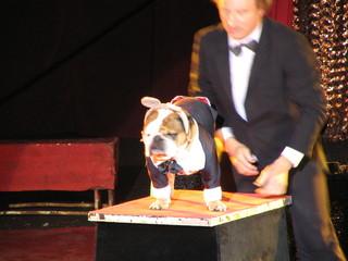 chien de cirque 1