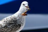 seagull take away poster