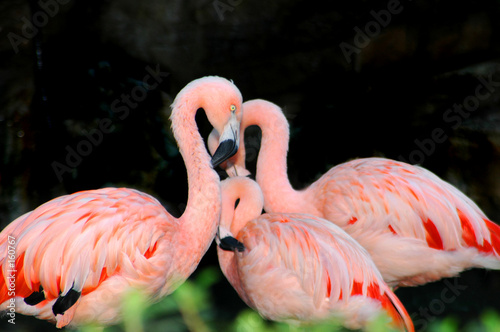 Foto op Aluminium Flamingo mother flamingo