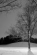 light post behind the tree, winter scene - black & white
