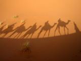 shadow of caravan