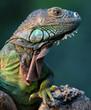 roleta: iguane vert-green iguana