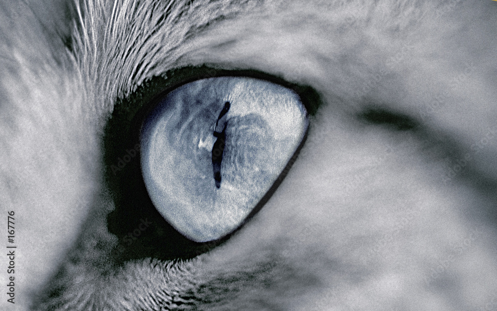 oko makro zbliżenie - powiększenie