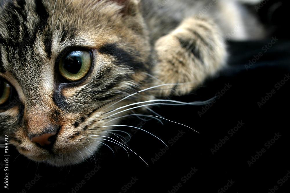 Kociak - powiększenie