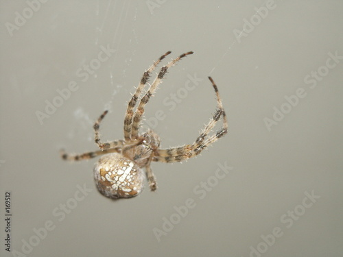 araignée 01