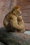 monkey kid poster
