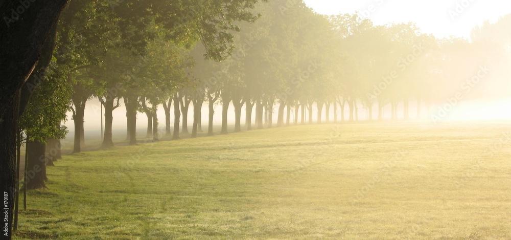 mgła słońce ranek - powiększenie