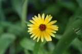 perfect sun-flower poster