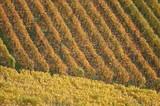 orange vineyard poster