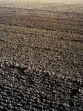 soil field poster