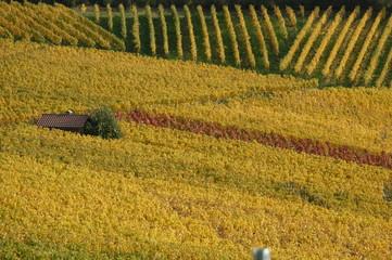 wider fields