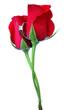 rosas rojas y anillo