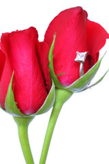 rosas de san valentin