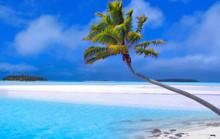 palma paraíso