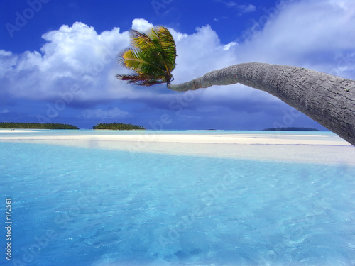 Leinwanddruck Bild bending palm