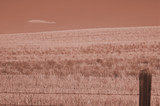 sepia-toned field poster