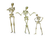 funny skeletons poster