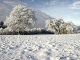 winter - 182171