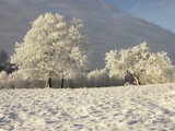 winter - 182176