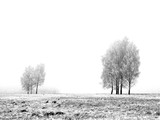 winter - 182177
