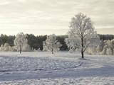 winter - 182950