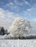 winter - 182954