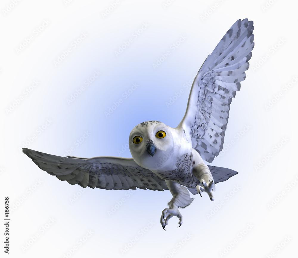 ptak latać latający - powiększenie