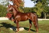 autumn horse poster