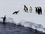 penguin flight poster