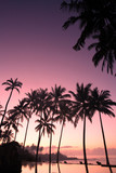 coconut tree at sunrise poster